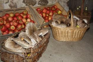 Récolte pomme/champignon 38