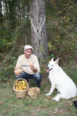 ramassage de pomme